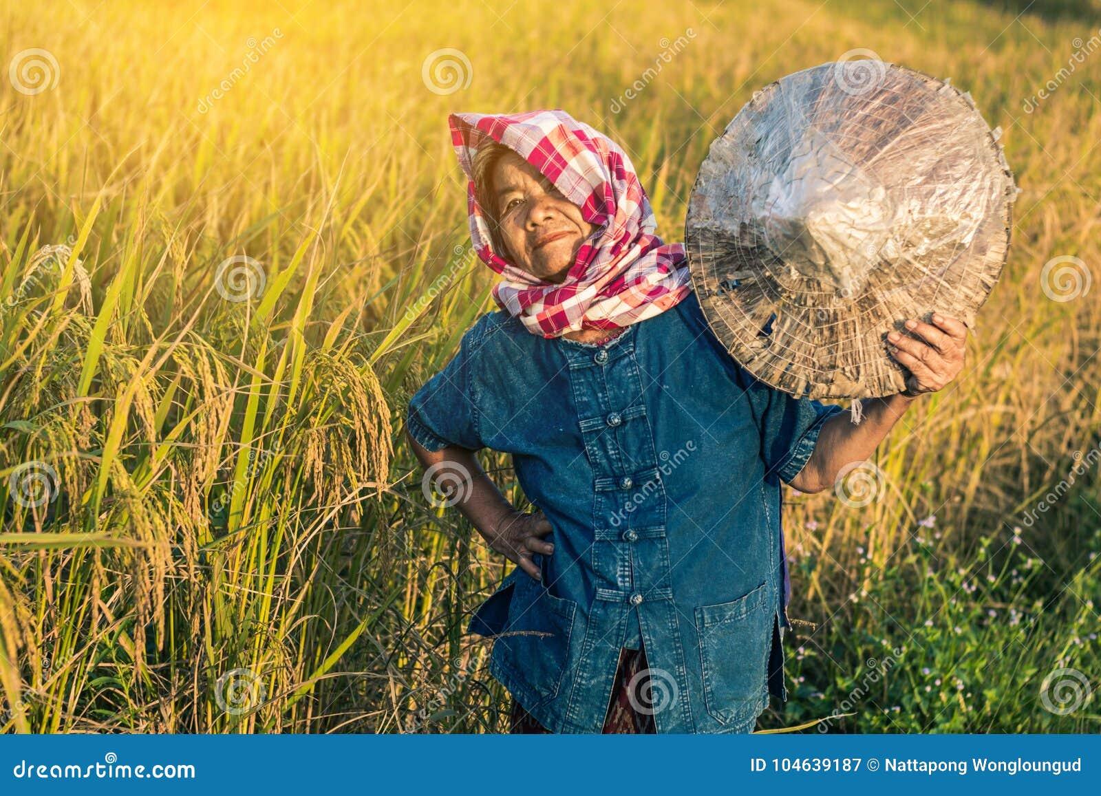 Download Landbouwer met rijstoogst stock afbeelding. Afbeelding bestaande uit levensstijl - 104639187
