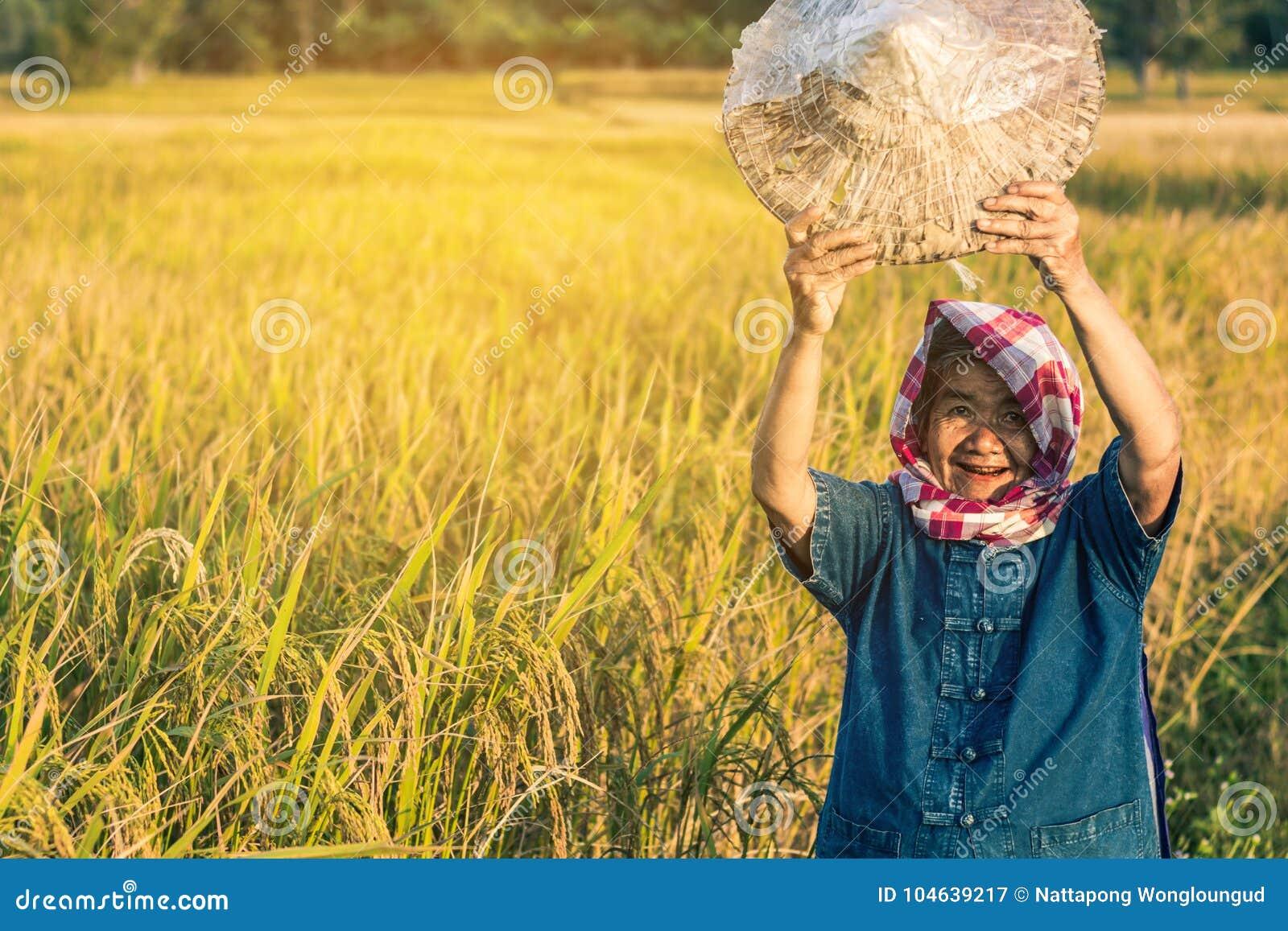Download Landbouwer met rijstoogst stock afbeelding. Afbeelding bestaande uit gelukkig - 104639217