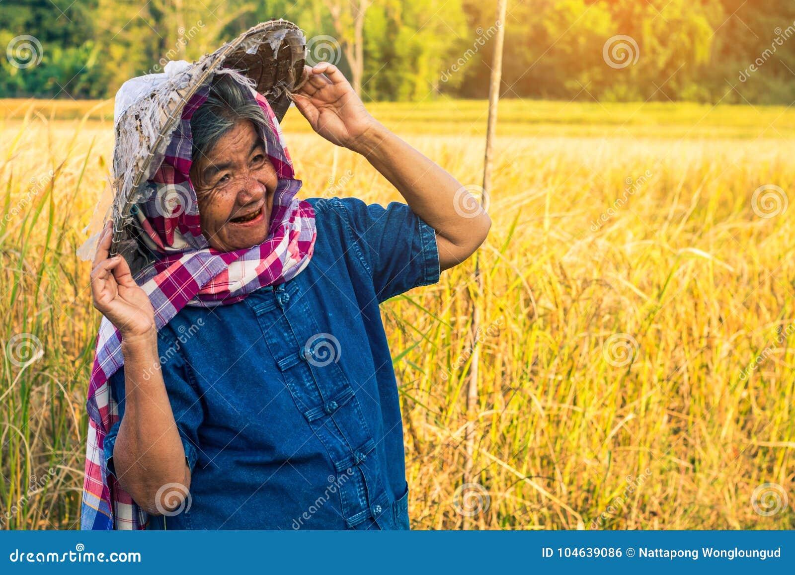 Download Landbouwer Met Rijstoogst, Conceptenlandbouwer Stock Foto - Afbeelding bestaande uit gebied, achtergrond: 104639086
