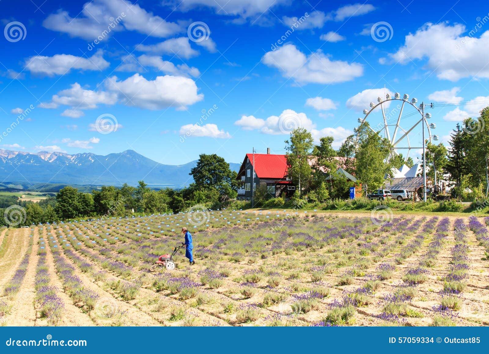 Landbouwer op een lavendelgebied in Furano en panoramisch wiel die aan achtergrond werken