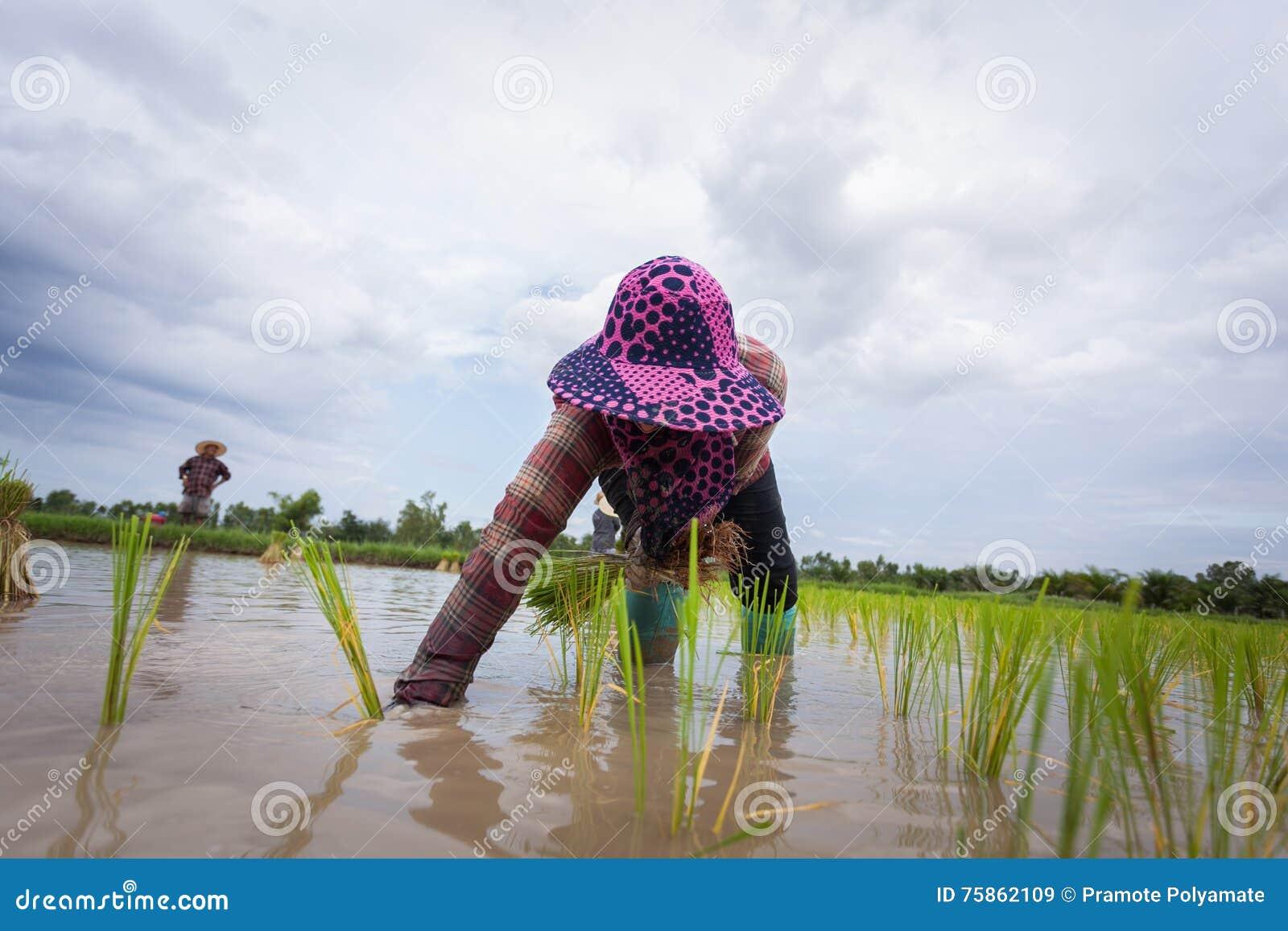 Landbouwers