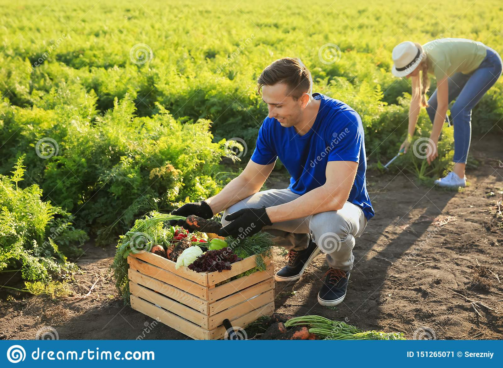 Landbouwers die groenten op gebied verzamelen