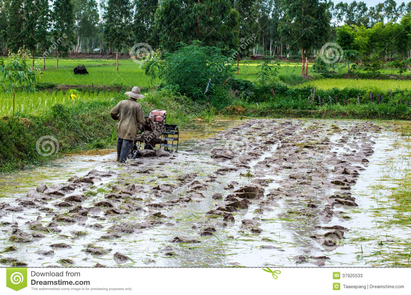 Landbouwers Thailand