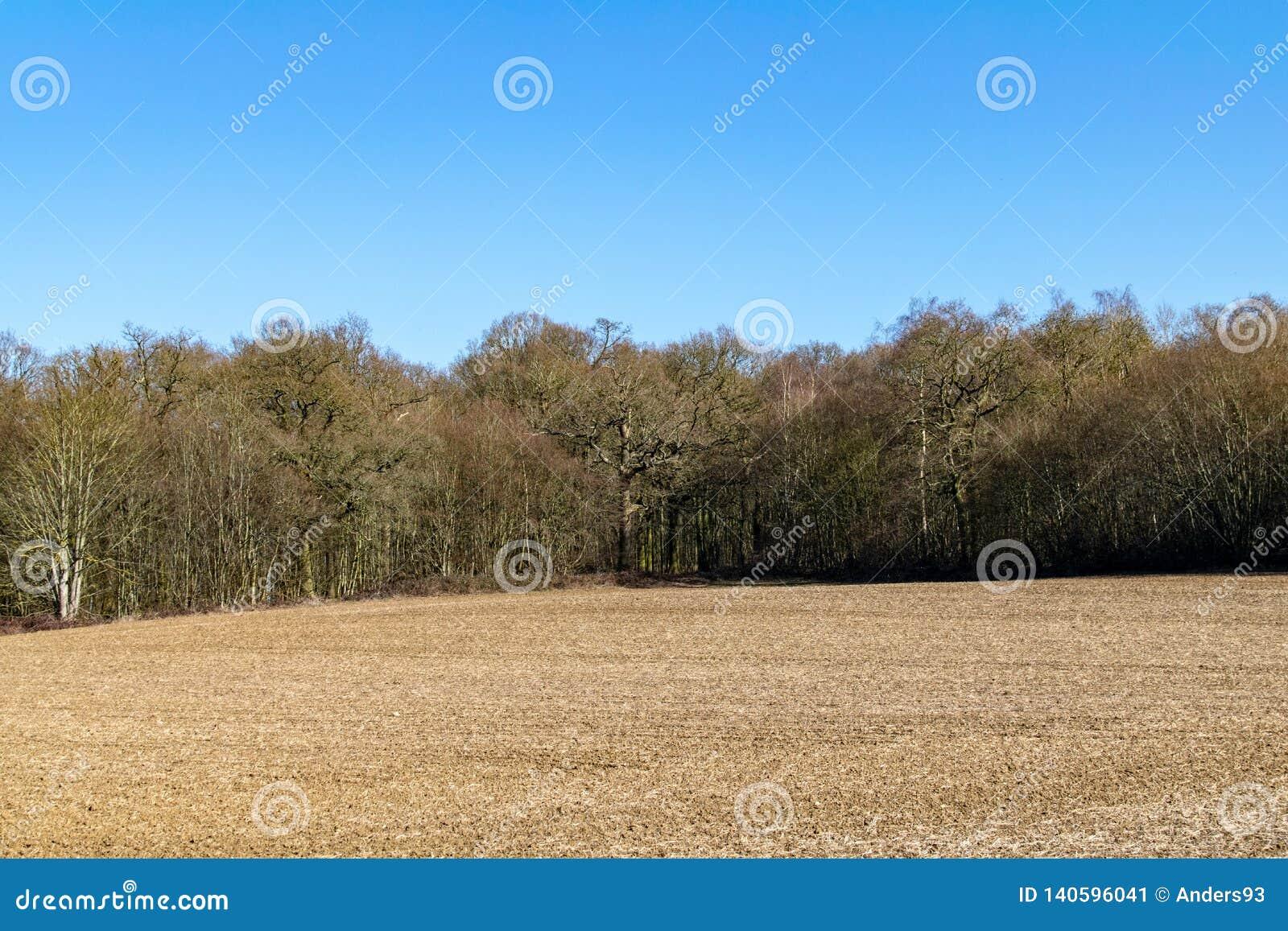 Landbouwgebied vooraan op de winter bosscène op een warme zonnige dag in Februari