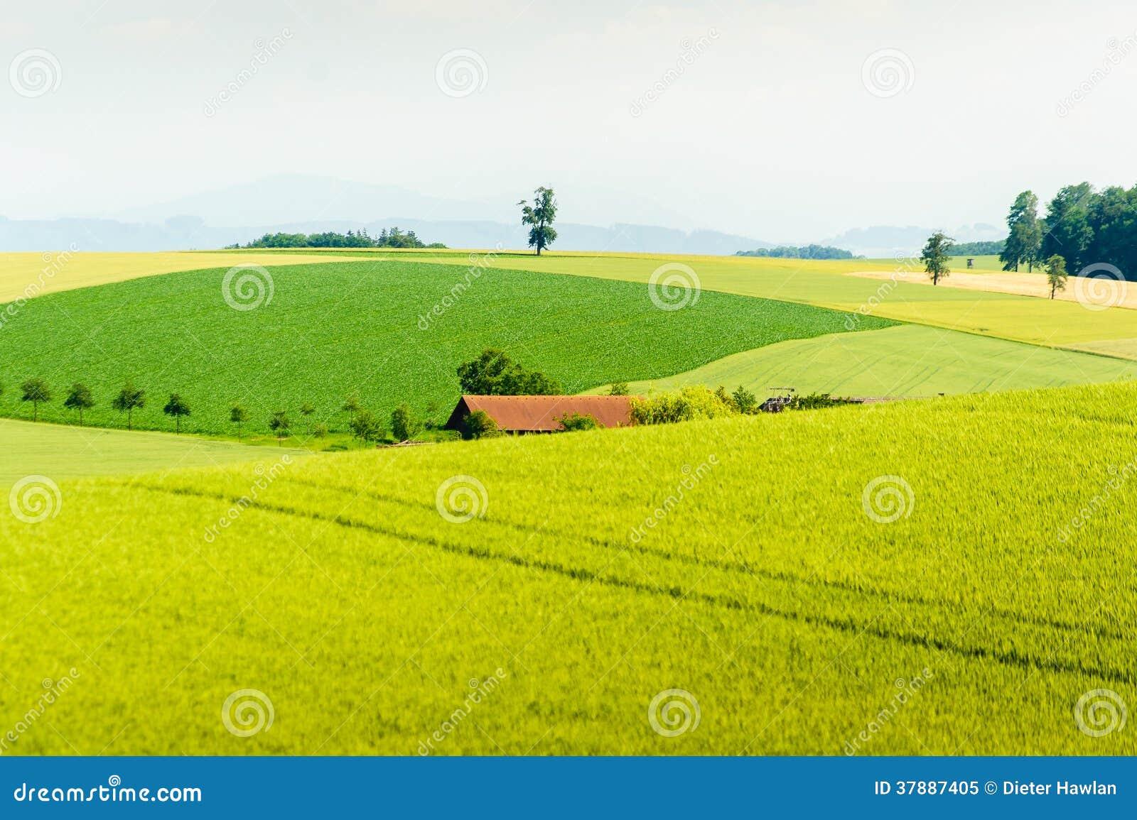 Landelijk de zomerlandschap
