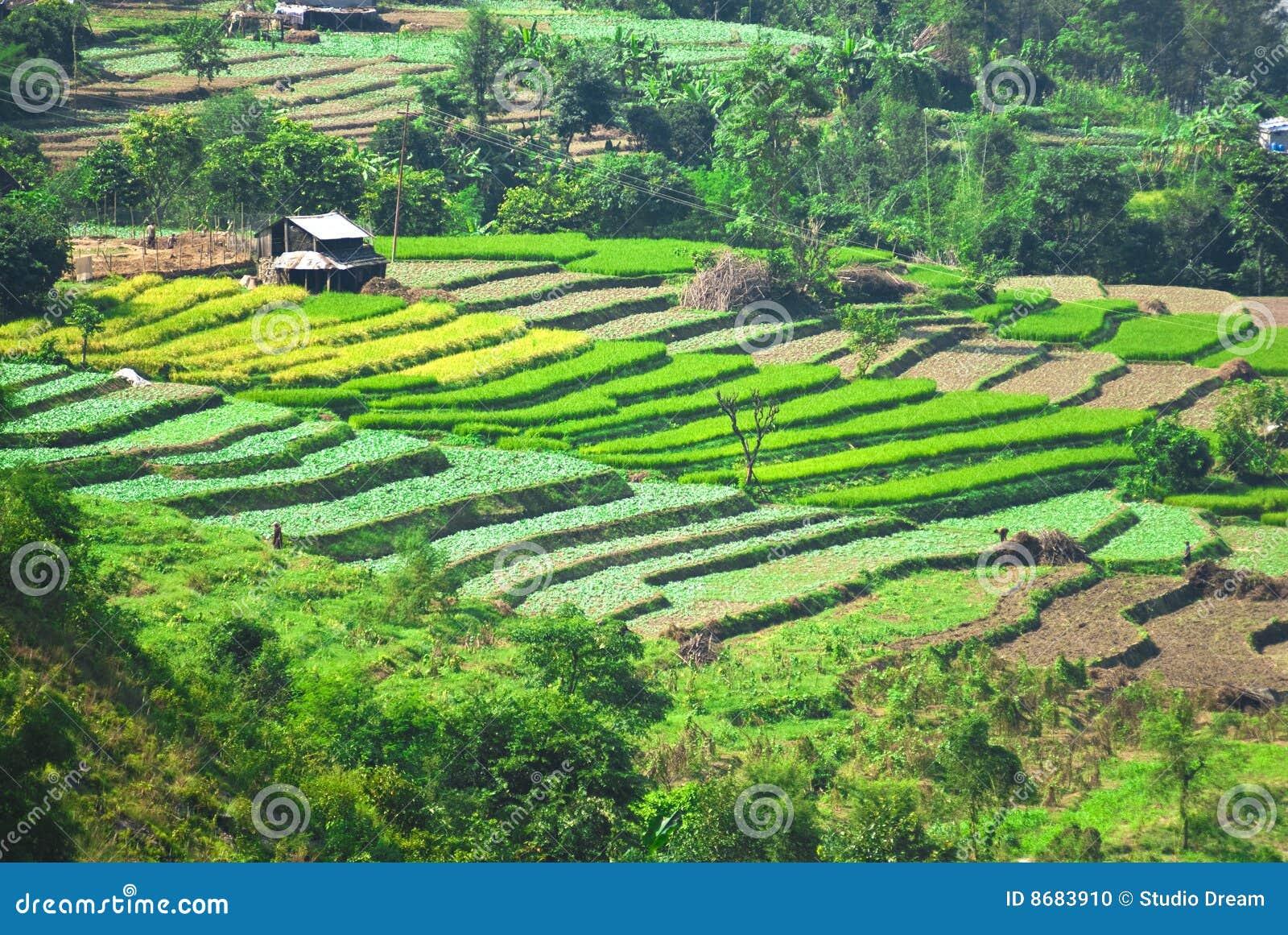 Landelijk landschap India