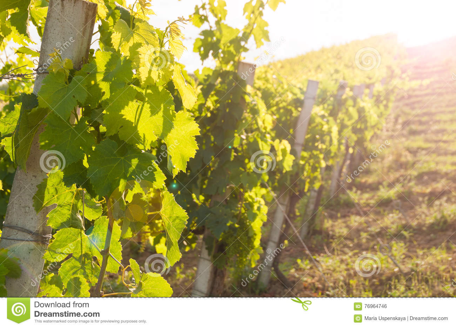 Landelijk landschap met een groene wijngaard onder heuvels
