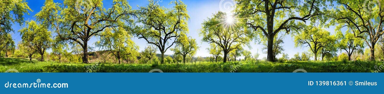 Landelijk landschap op een glorierijke zonnige de lentedag