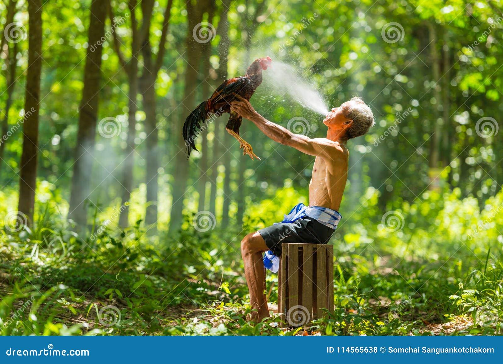 Landelijk oud mensen bespuitend water om binnenlandse het vechten haan te verfrissen