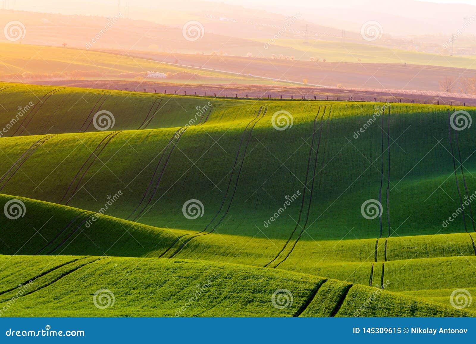 Landelijke de textuurachtergrond van de de lentelandbouw Groene golvenheuvels in Zuid-Moravi?, Tsjechische Republiek tijdens zons