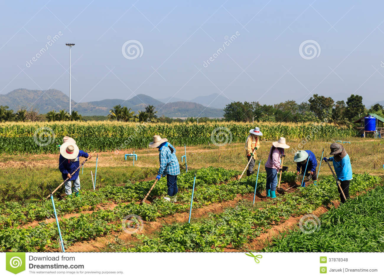 Landelijke landbouwers