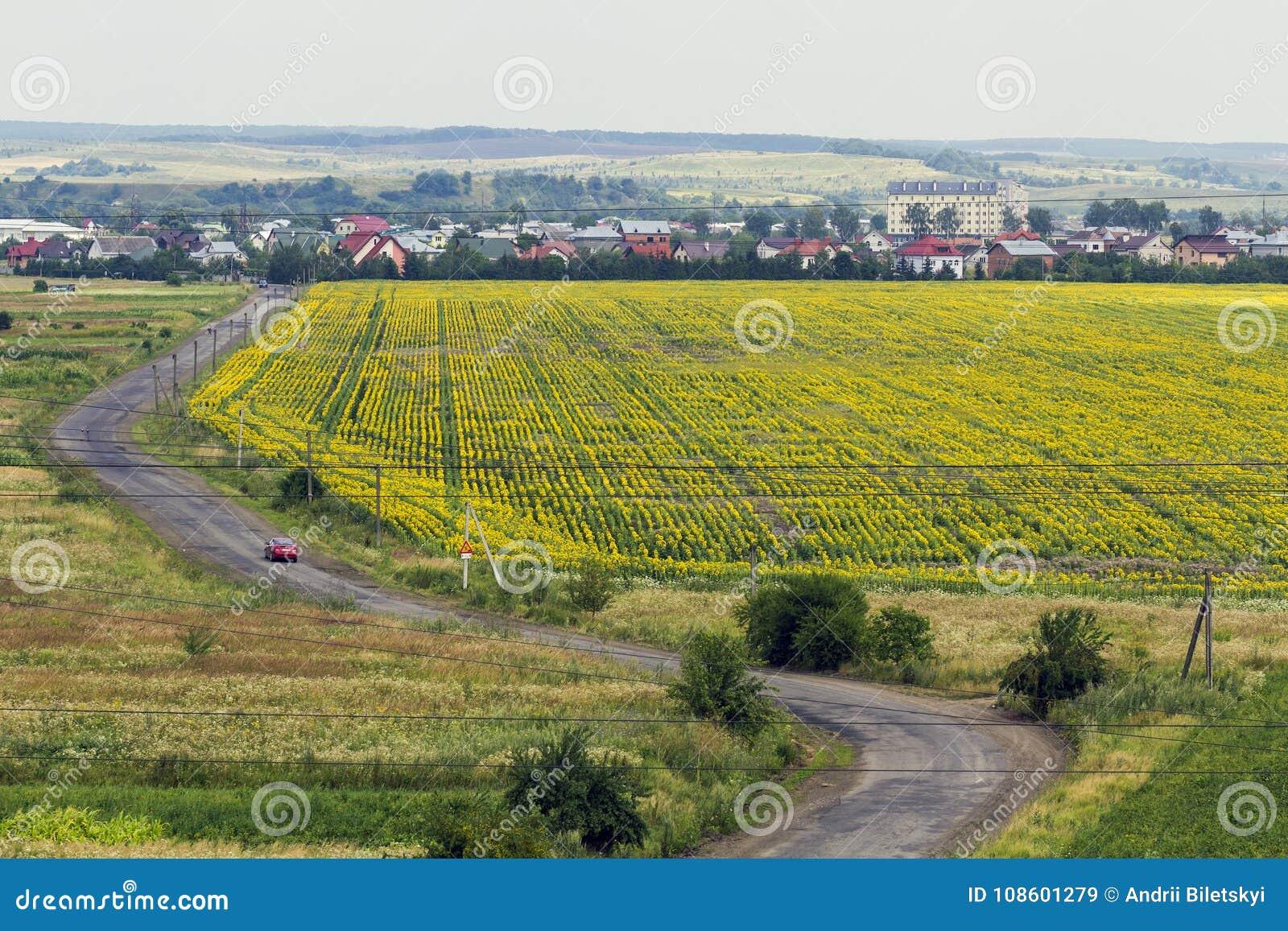 Landelijke plattelandsweg tussen gele zonnebloemgebieden en klein