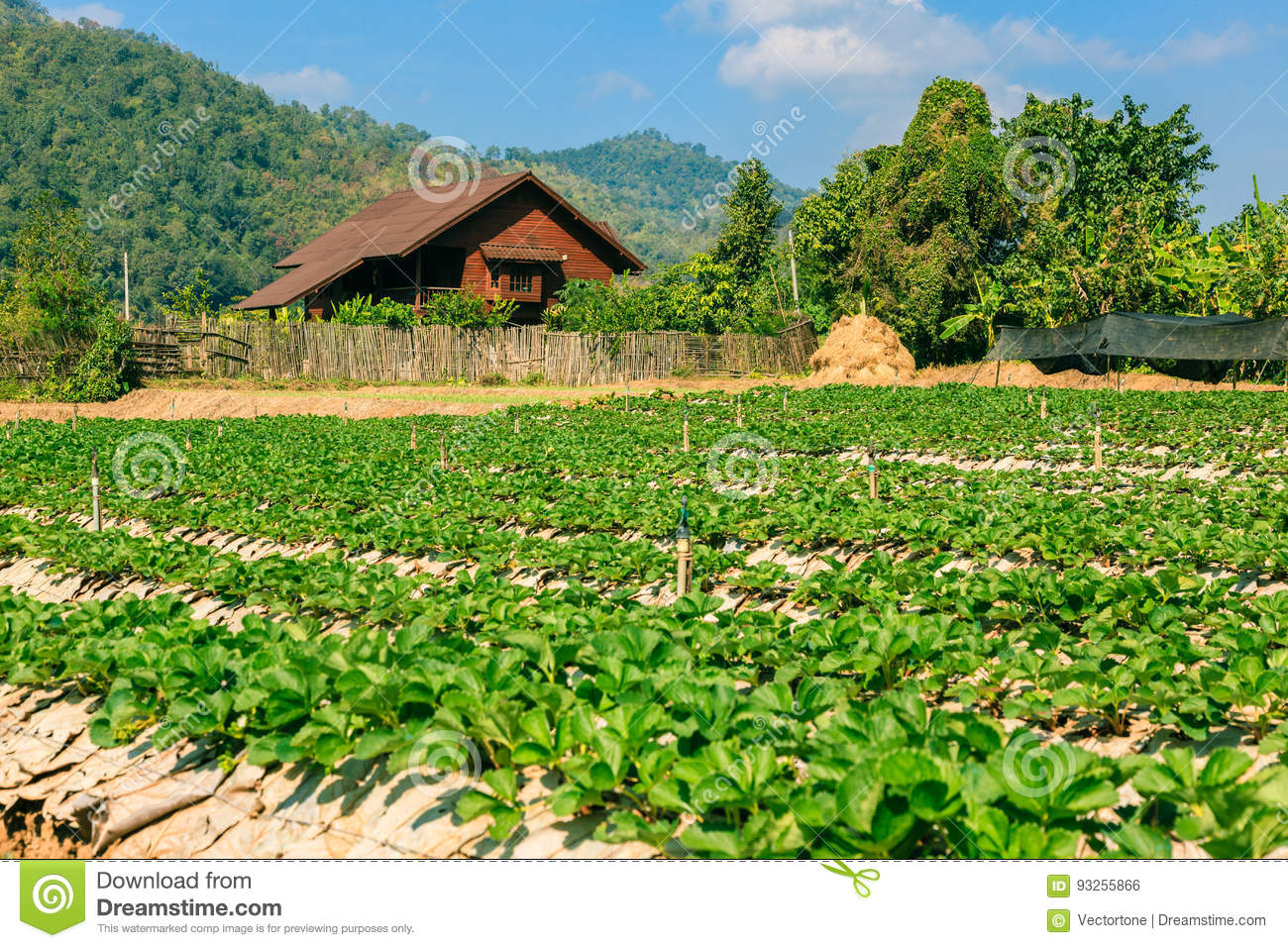 Landscape of agriculture organic field.