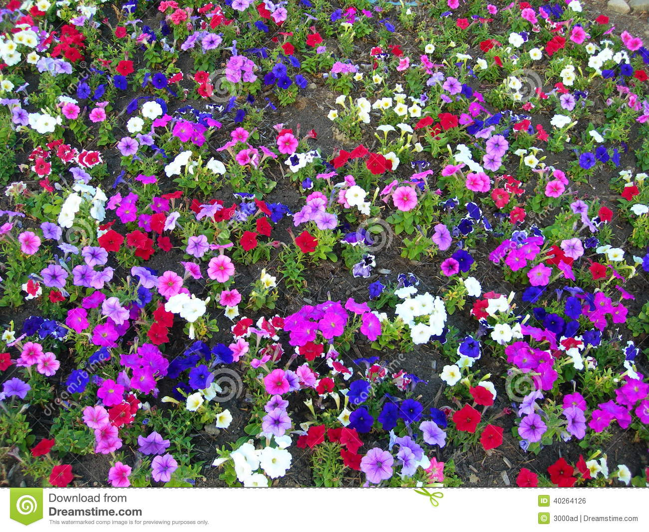 landscape background with colored flower beds - Flower Beds