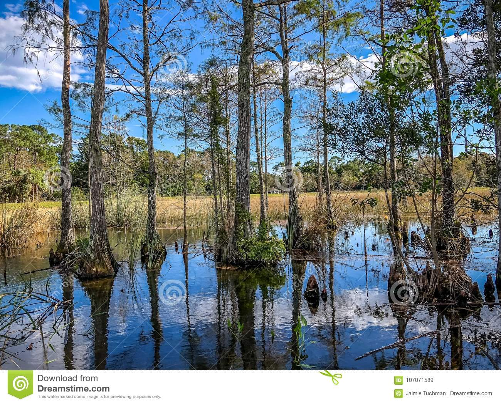autumn cypress swamp landscape