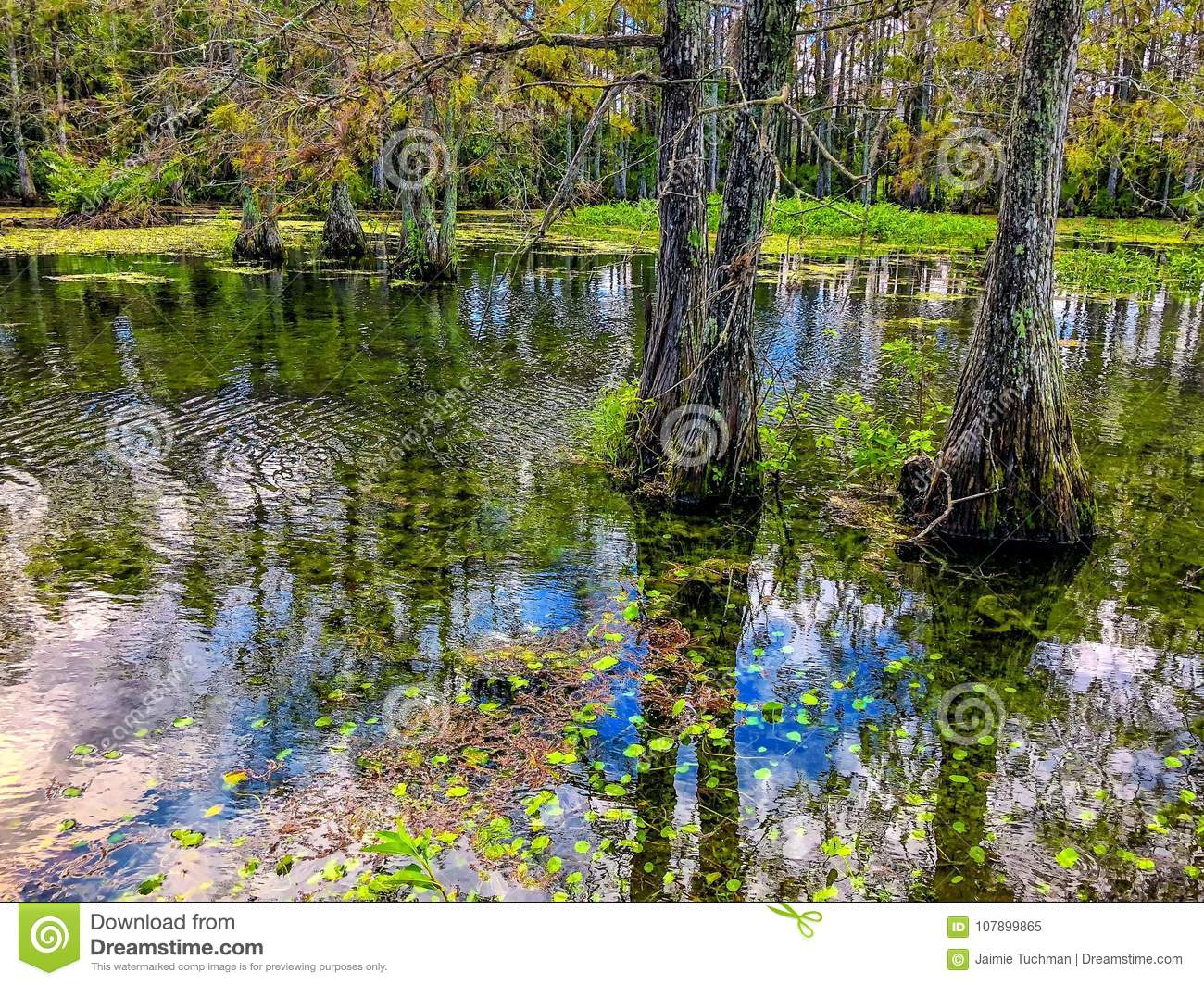 autumn cypress swamp landscape
