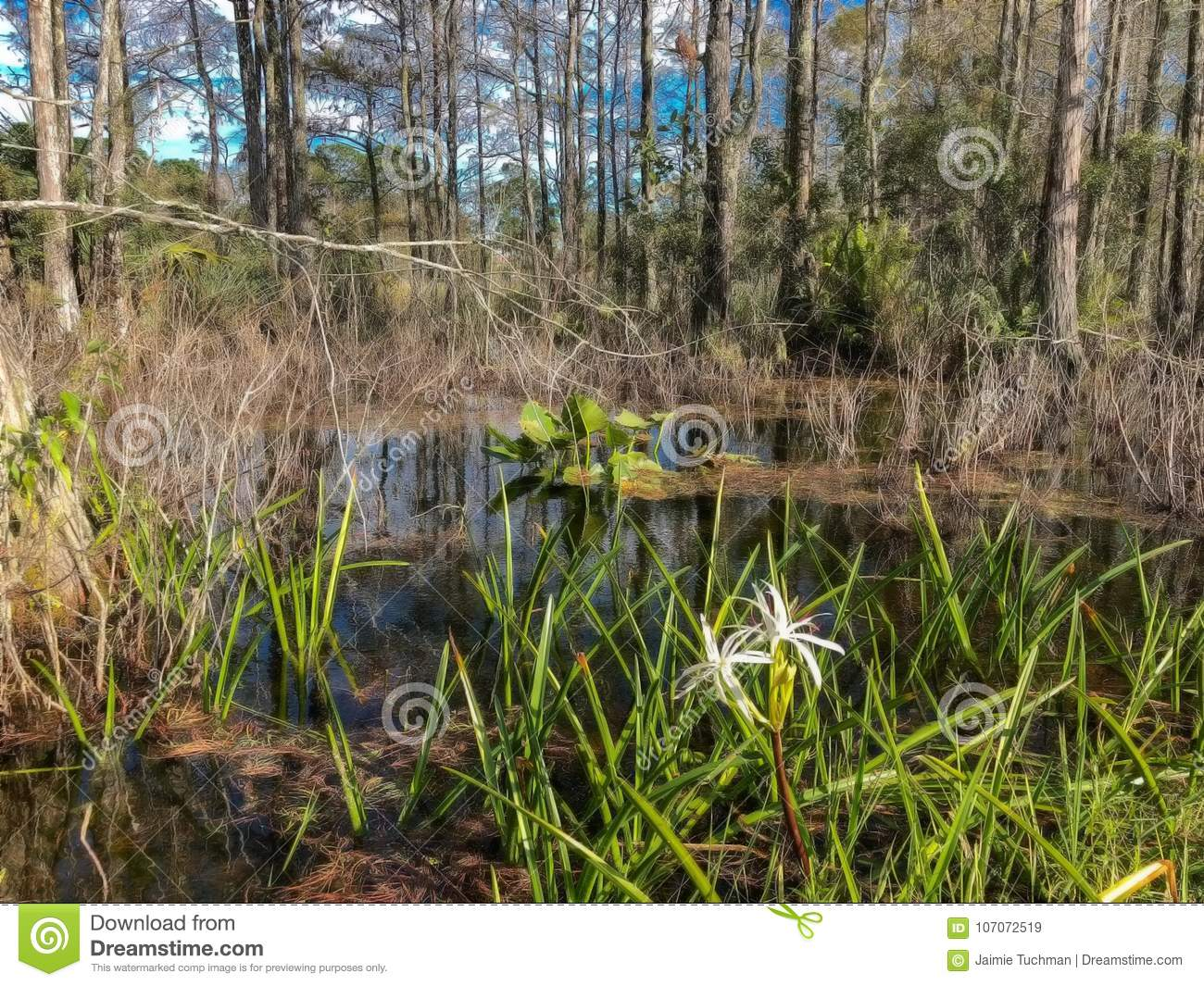 white swamp flower and cypress trees