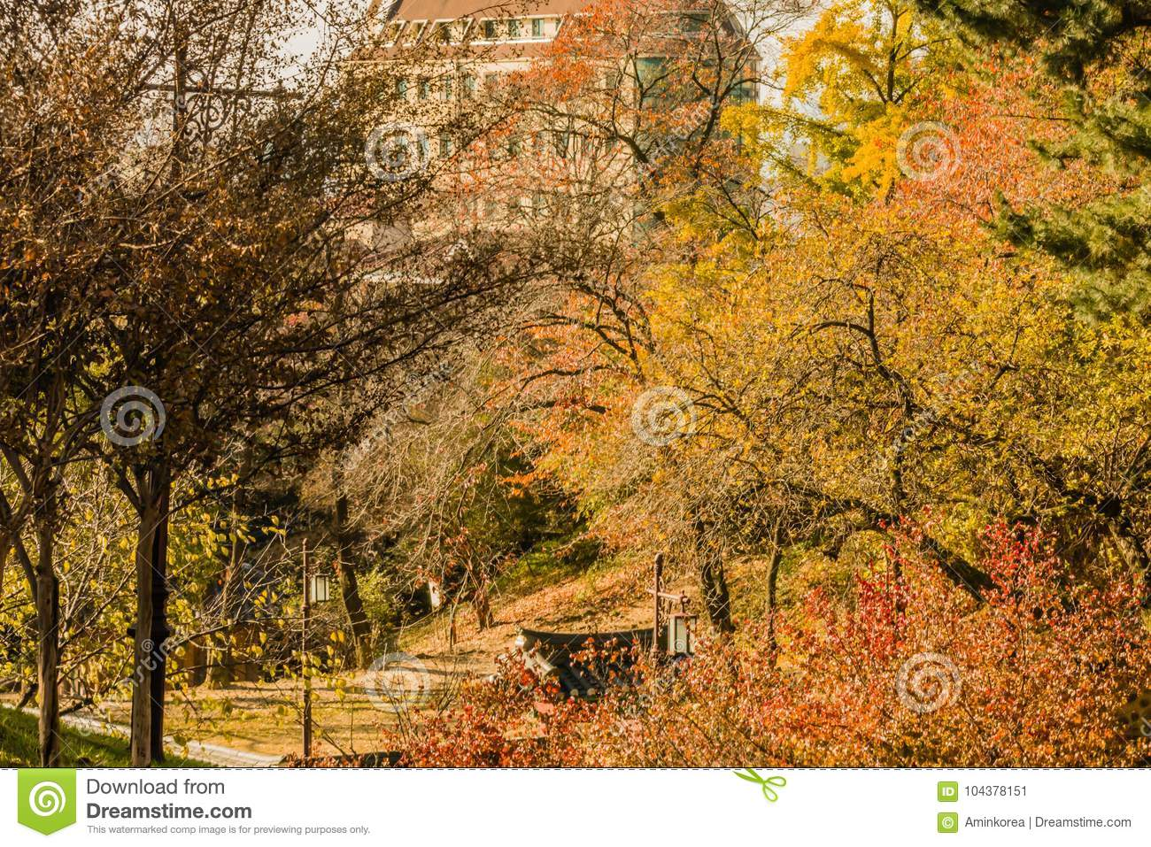 9a4c3e4905743 Landscape of a city park in Daejeon, South Korea, with trees in fall colors  with a massive stone brick apartment building in the background