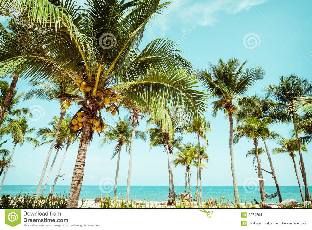 Landscape Of Coconut Palm Tree On Tropical Beach In Summer Stock ...