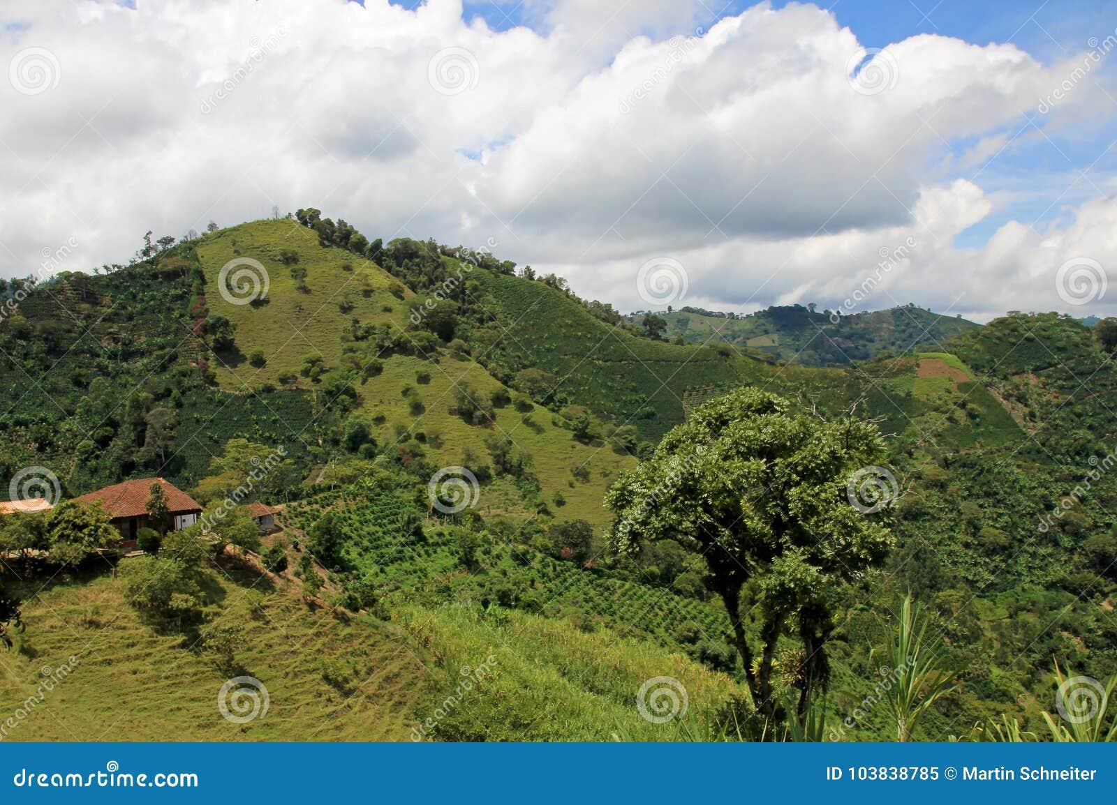Landscape of coffee and banana plants in the coffee growing region near El Jardin, Antioquia, Colombia