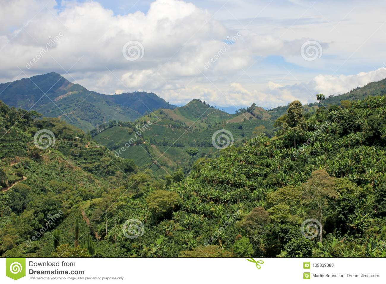 Landscape of coffee and banana plants in the coffee growing region near El Jardin, Antioquia, Colombia