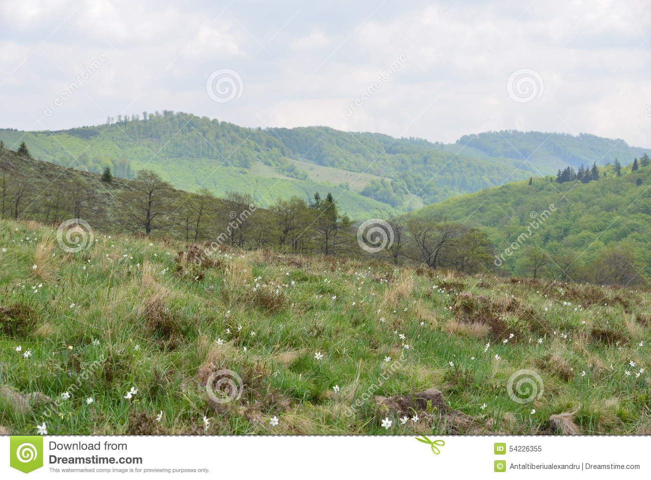 Landscape with the Daffodils Glade (in Romanian: Poiana Narciselor) and mountains.