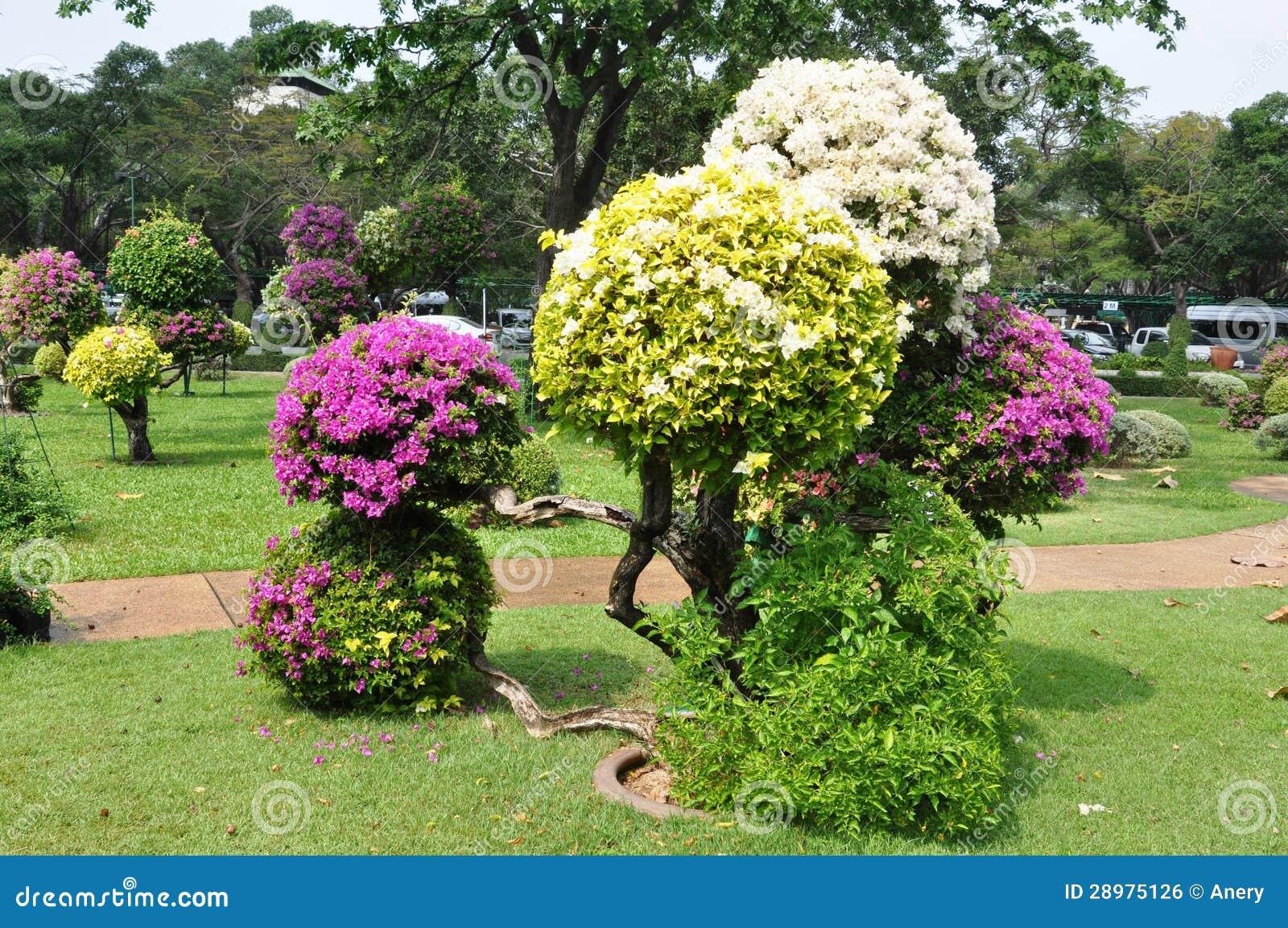 Landscape Design Bougainvillea Stock Images - 116 Photos
