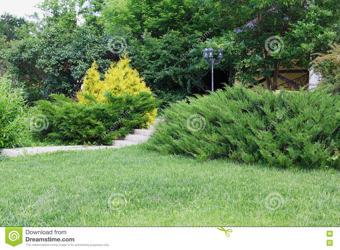 landscape design evergreen bushes and path stock photo