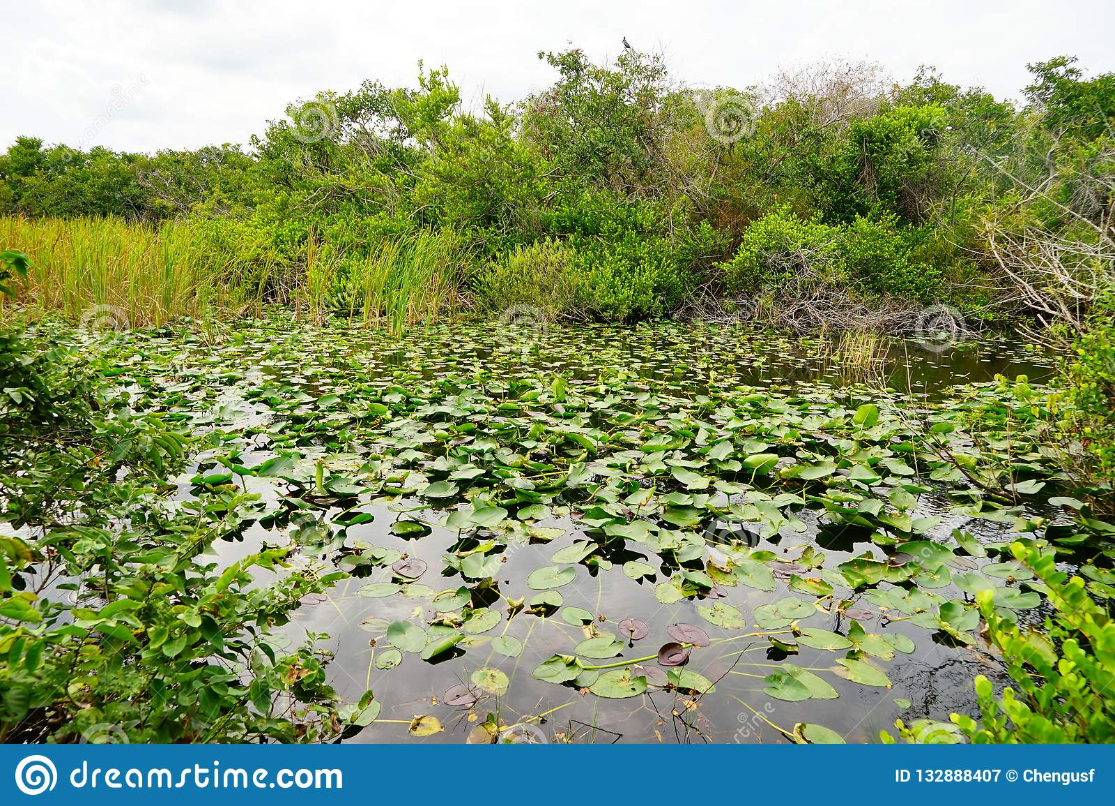 Everglades national park landscape