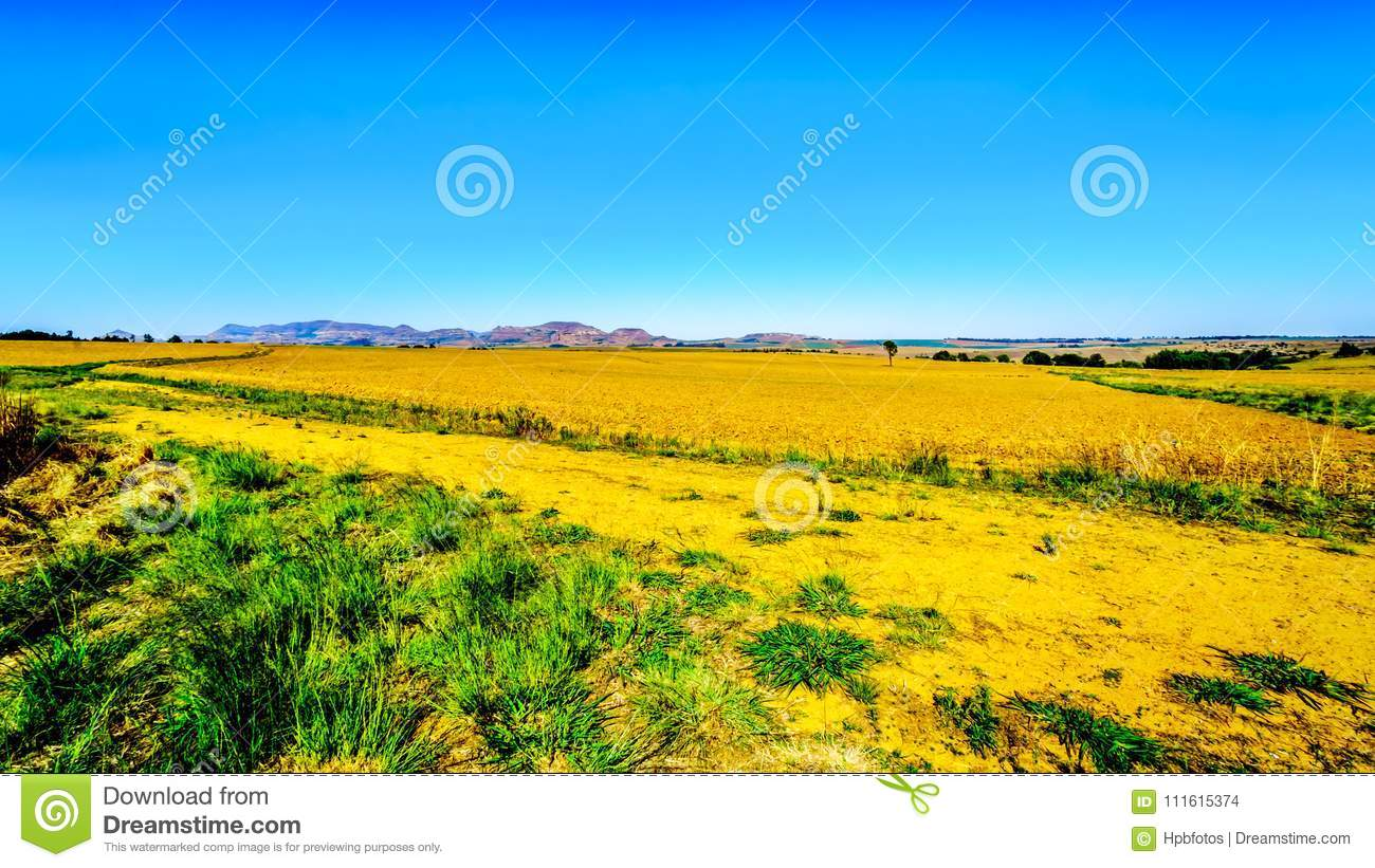 Landscape with the fertile farmlands along highway R26, in the Free State province of South Africa