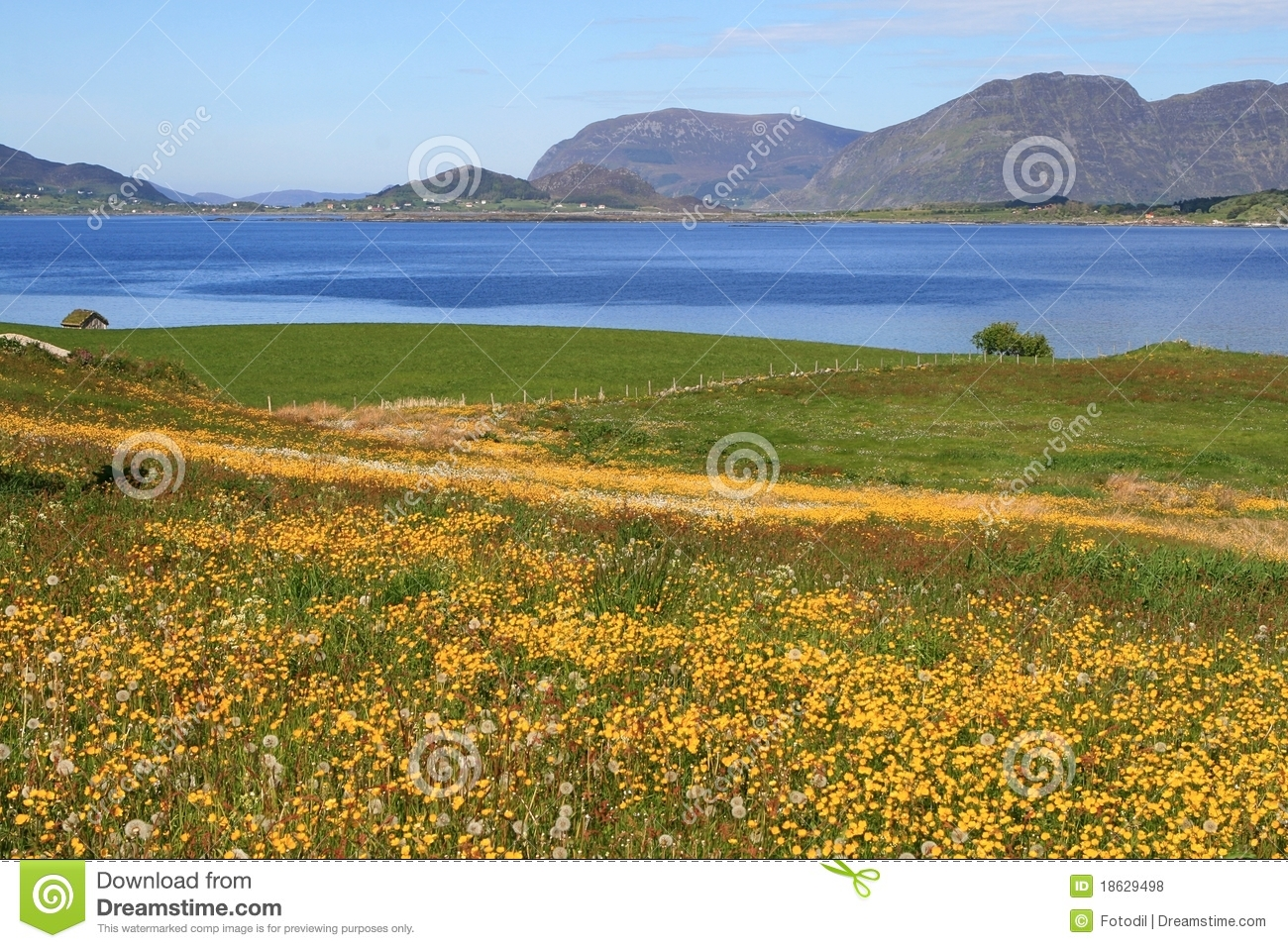 Landscape With Flowers Near Water