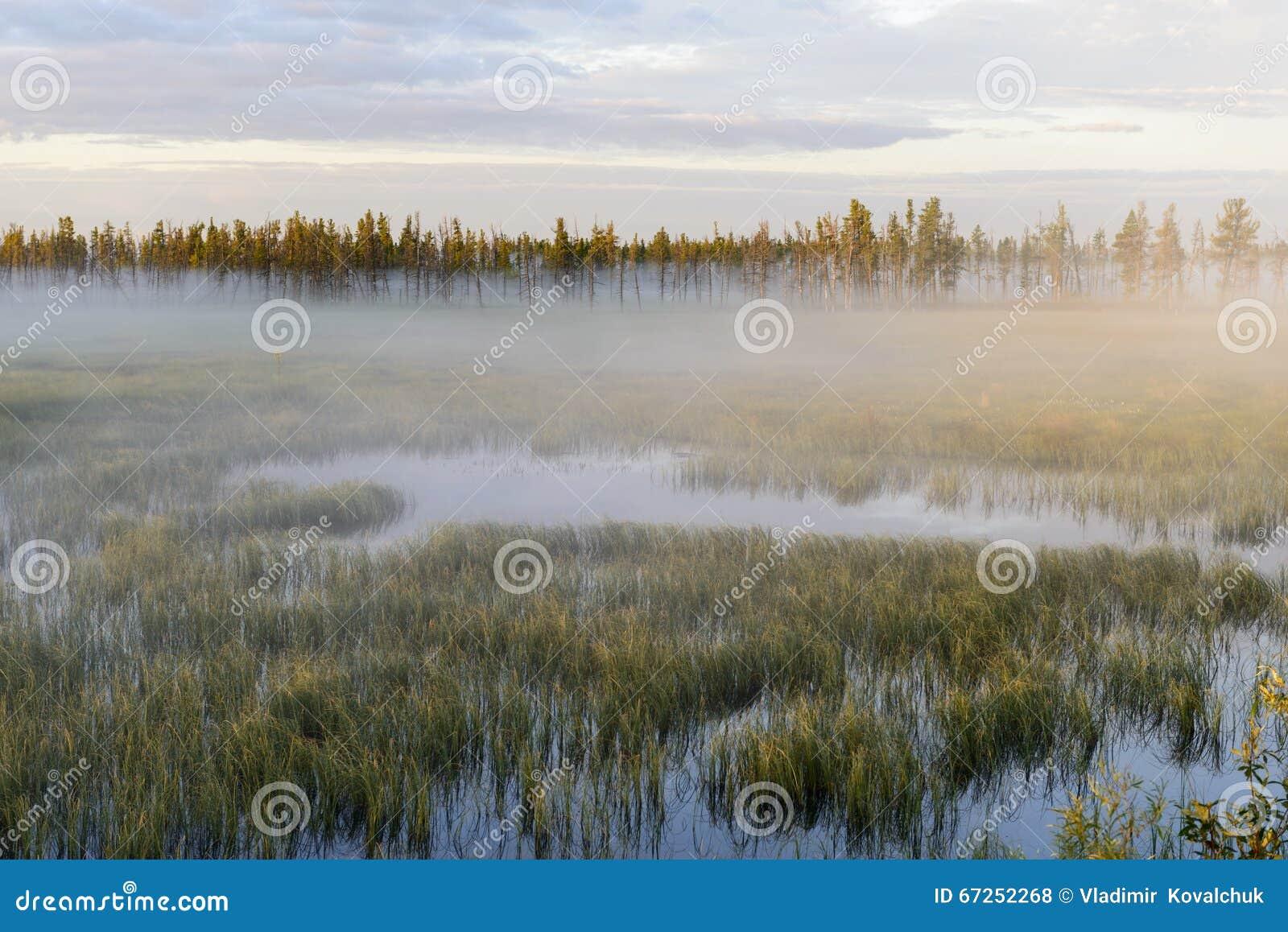 Sunrise On Bogs Royalty-Free Stock Image   CartoonDealer ...