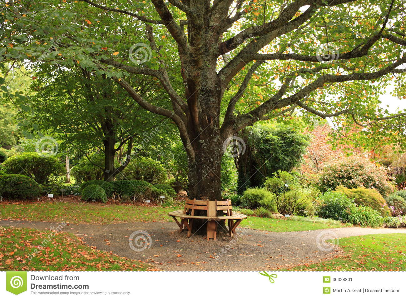 Bench Around Tree In Park At Fall Stock Image - Image ...