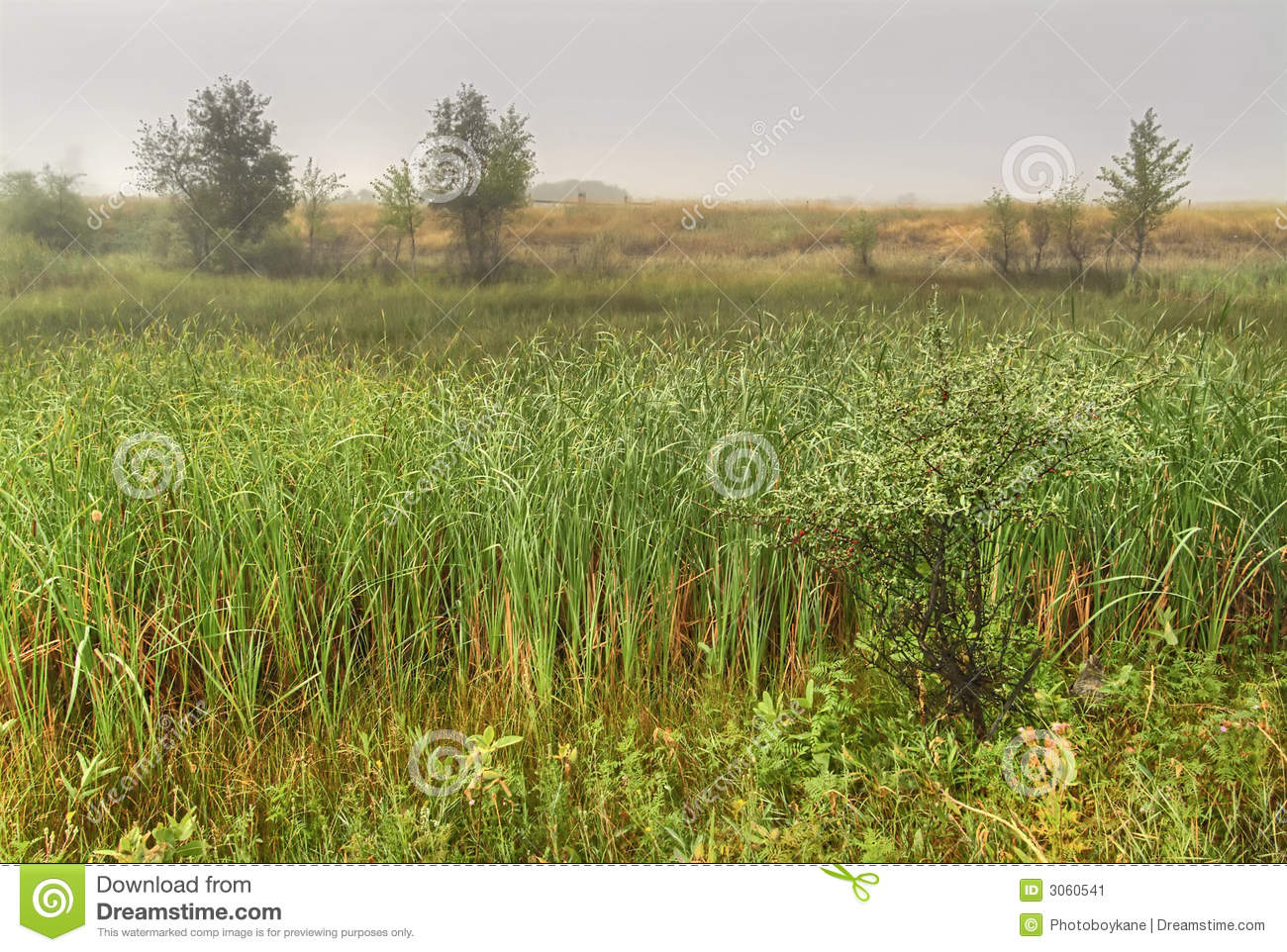 Landscaping With Evergreens And Grasses : Early morning scenic from the wetlands near headwaters of