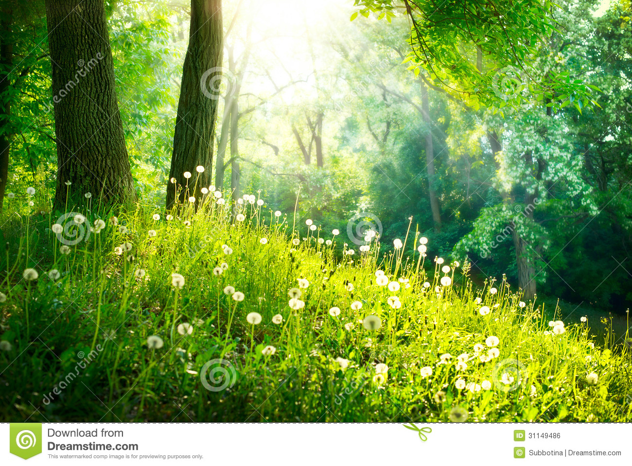 Landscape. Green Grass And Trees Royalty Free Stock Image  Image