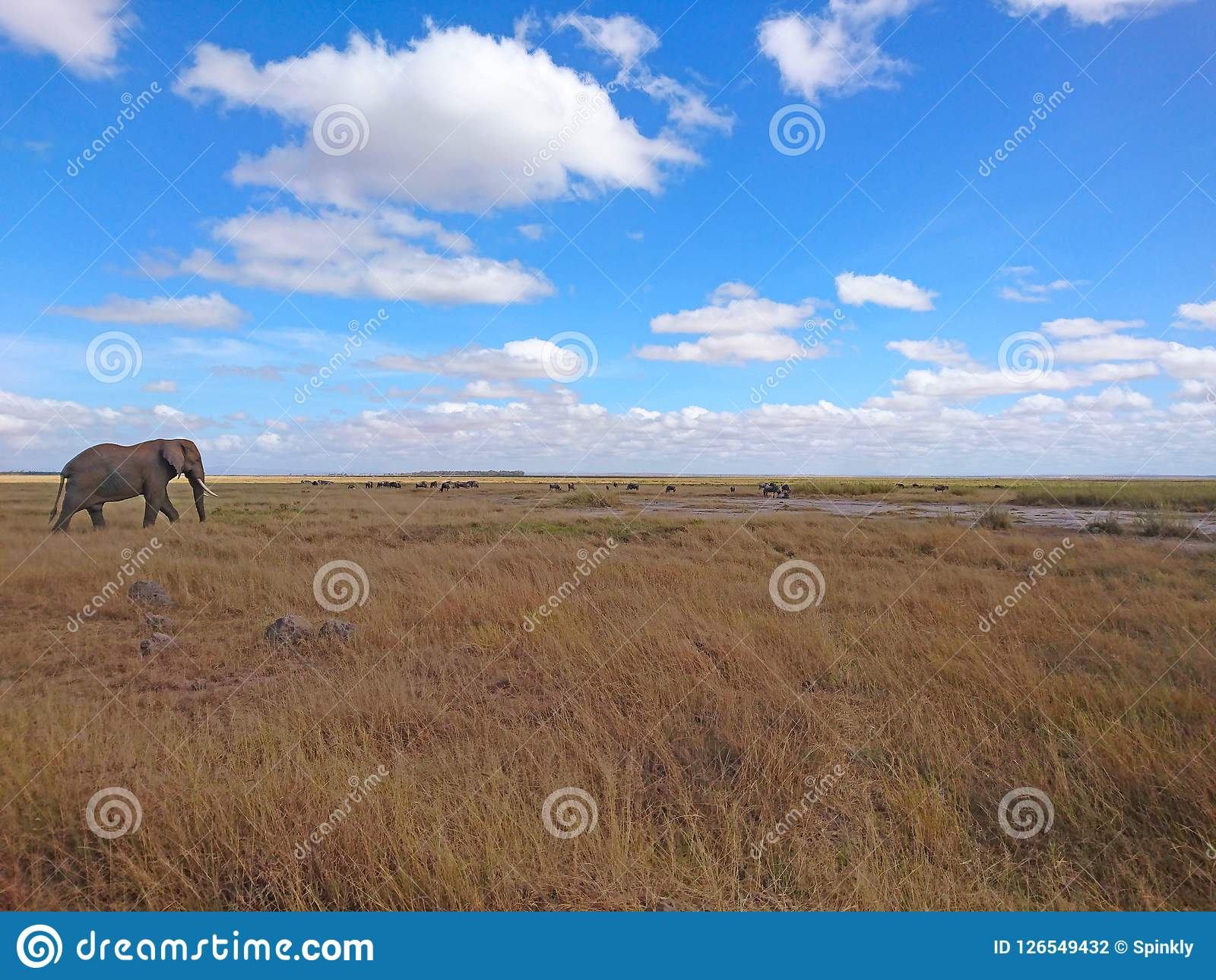 Landscape image background with elephant