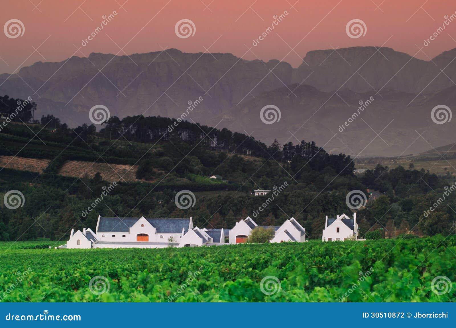 Landscape image of a vineyard, Stellenbosch, South Africa.