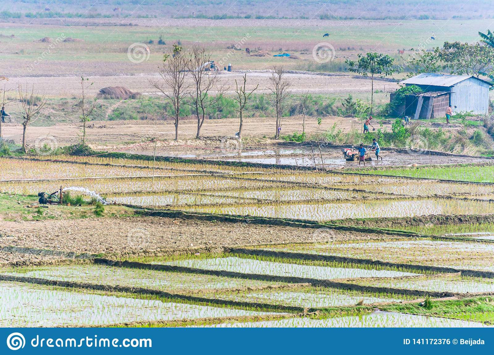 Landscape of Indian rice fields with workers.