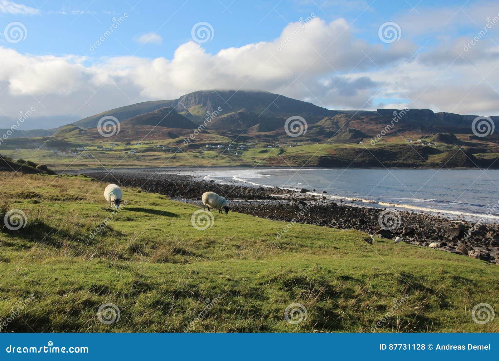 Download Landscape on Isle of Skye stock photo. Image of landscape - 87731128