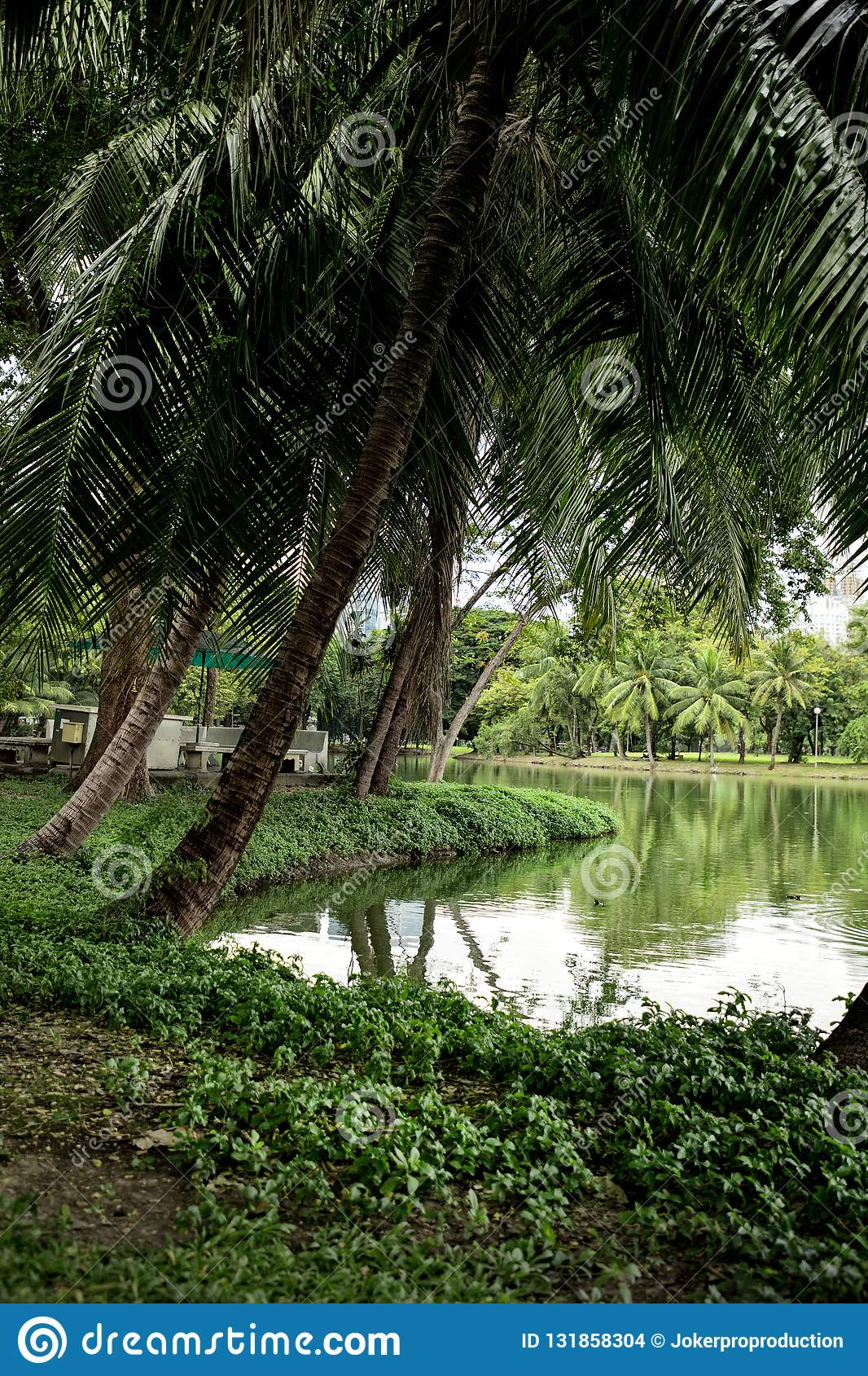 Lakeside view with palm trees in Lumphini Park in B