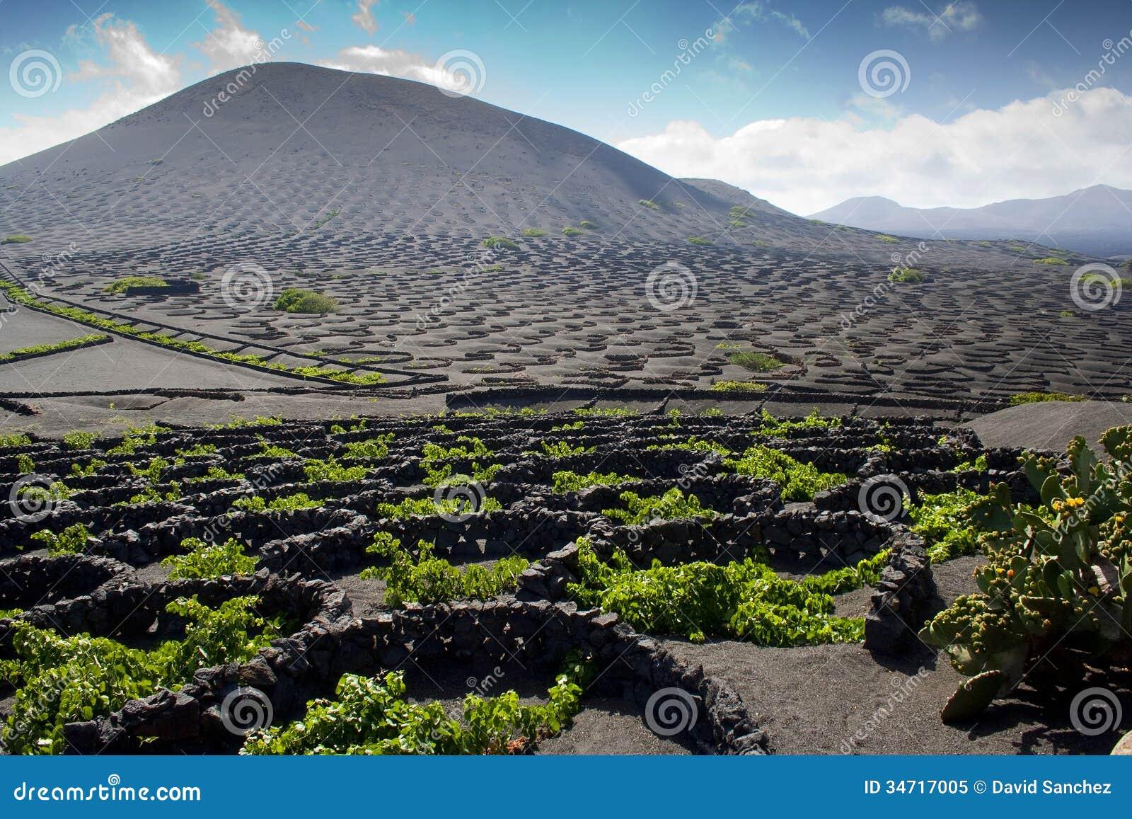 Free Plans Vineyard In Lanzarote Landscape Of Lanzarote Stock Image