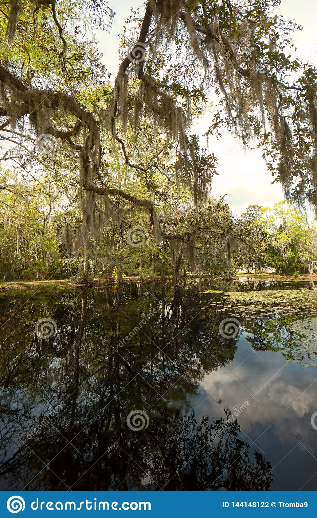 A landscape of live oaks, cypress trees, Spanish moss and reflections in a calm pond.