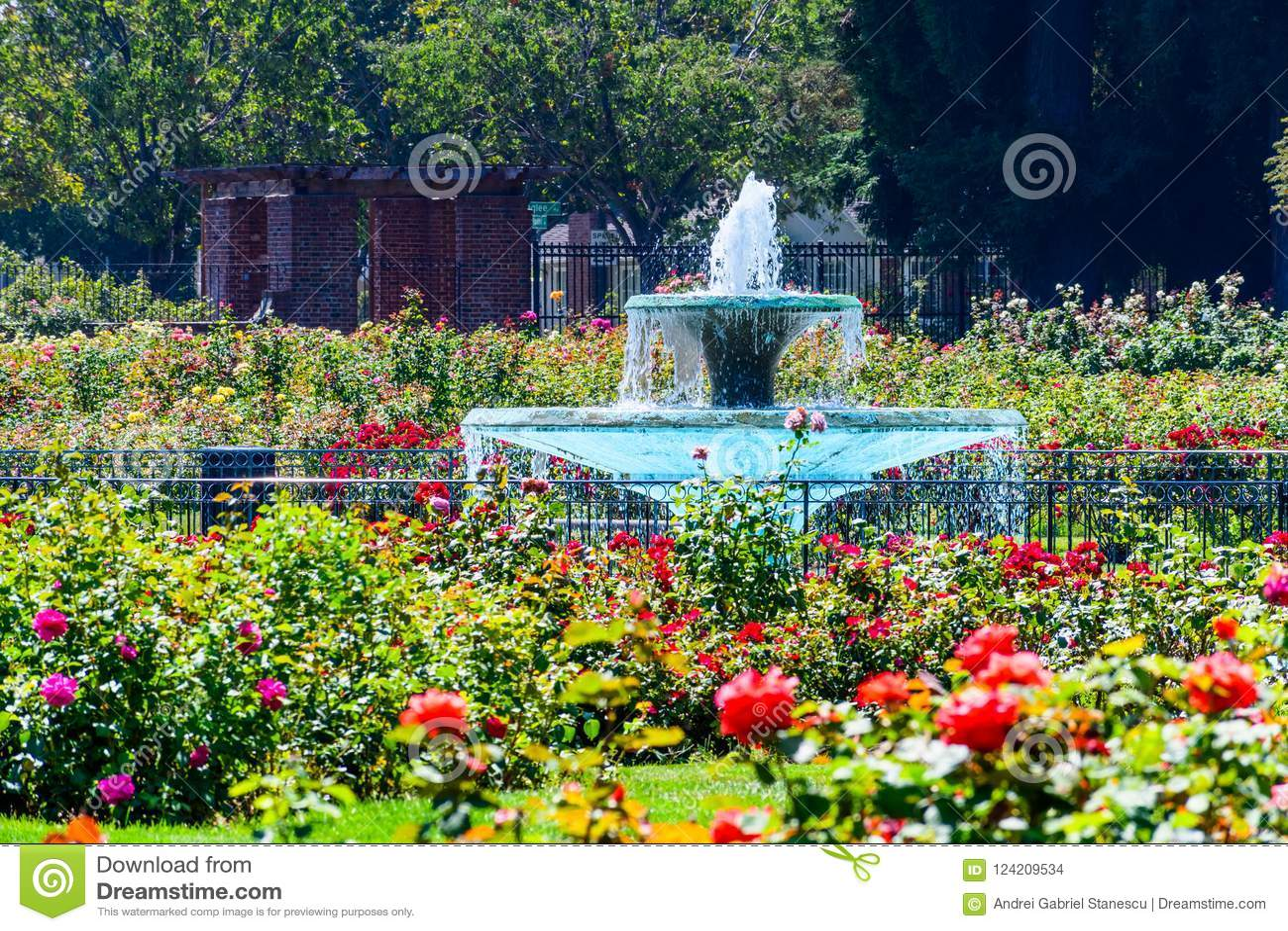 Landscape In The Municipal Rose Garden San Jose California Stock Photo Image Of Municipal Colors 124209534