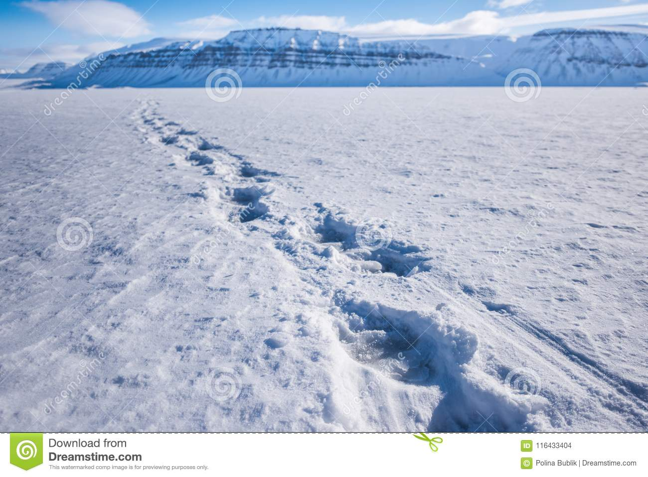 Landscape nature polar bear track on an ice floe of Spitsbergen Longyearbyen Svalbard arctic winter polar sunshine day sky