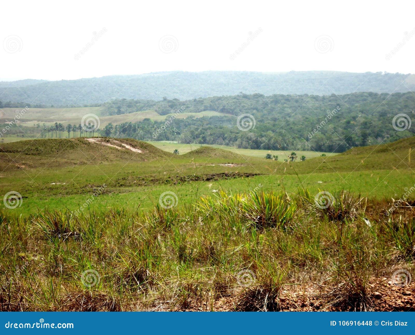 Paisaje Parque Gran Sabana Bolivar Venezuela