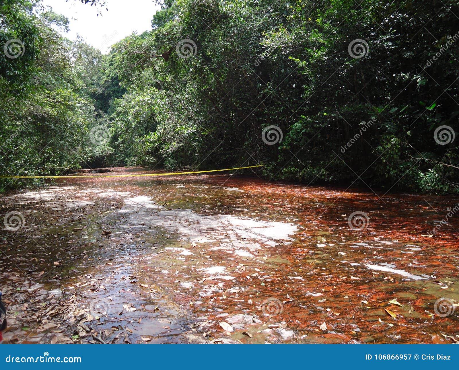 Parque Gran Sabana Bolivar Venezuela Paisaje