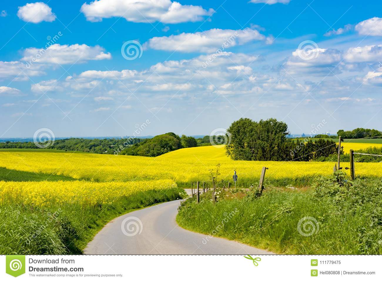 Agrarian fields, curved path, rural landscape, spring season, flowering yellow canola, blue sky