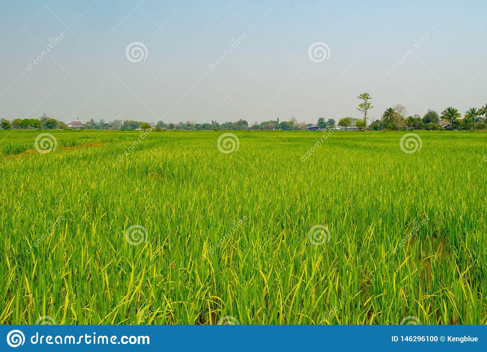 landscape rice feild at the north of Thailand