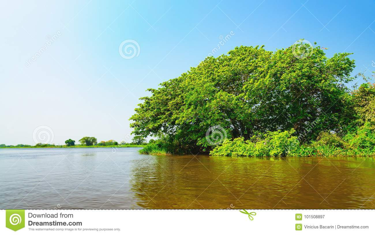 Landscape with the river and green vegetation of trees and plant