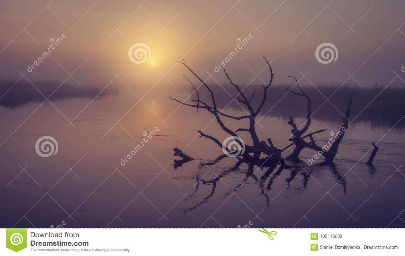 Download Landscape Of River On Morning Misty Sunrise. Old Dry Tree In Water In Early Foggy Dawn. Scenic River Stock Image - Image of reflection, calm: 105116683
